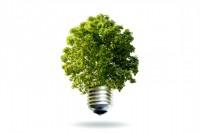 Groene stroom boom